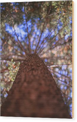 Wood Print featuring the photograph Rainbow Pine by Aaron Aldrich