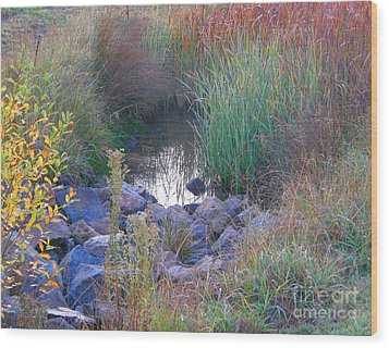 Rainbow Pond Wood Print