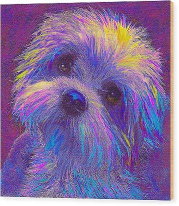 Rainbow Shih Tzu Wood Print by Jane Schnetlage