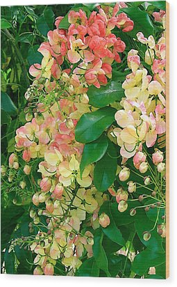 Rainbow Shower Tree Wood Print by James Temple