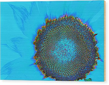 Rainbow Sunflower Wood Print by Phyllis Denton
