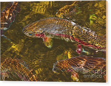Rainbow Trout Wood Print by Cari Gesch