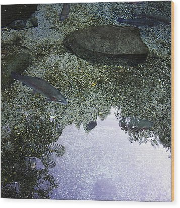 Rainbow Trout Wood Print by Les Cunliffe