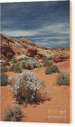 513p Rainbow Vista In The Valley Of Fire Wood Print by NightVisions
