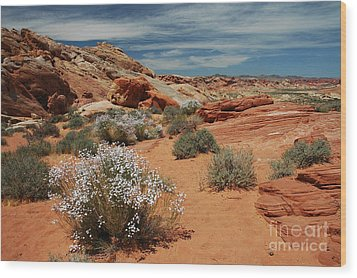 601p Rainbow Vista In The Valley Of Fire Wood Print by NightVisions