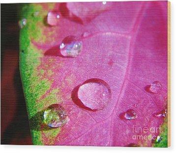 Raindrop On The Leaf Wood Print by D Hackett