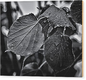 Raindrops After The Storm Wood Print by Brian Carson