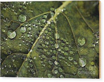 Raindrops Wood Print by Dennis Bucklin