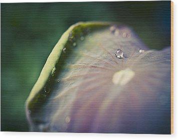 Raindrops On A Lotus Leaf Wood Print by Priya Ghose