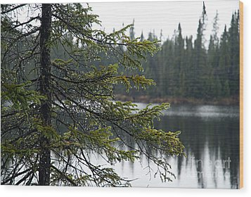 Raindrops On An Evergreen Wood Print by Larry Ricker