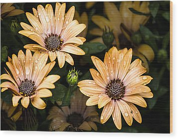 Raindrops On Gerbera Daisies Wood Print by Photographic Art by Russel Ray Photos