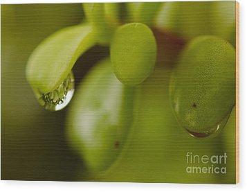 Raindrops V Wood Print by Tamara Becker