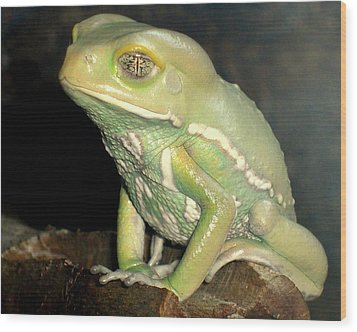 Rainforest Frog Wood Print by Heidi Manly