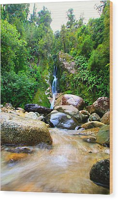 Wood Print featuring the photograph Rainforest Stream New Zealand by Amanda Stadther