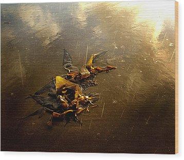 Rainkelp Wood Print by Randal Bruck