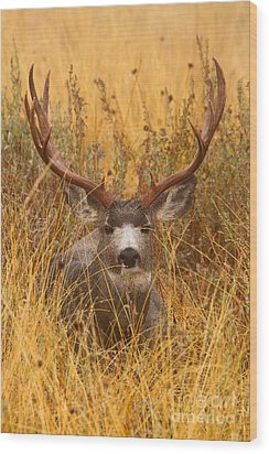 Wood Print featuring the photograph Rainy Mountain Buck by Aaron Whittemore