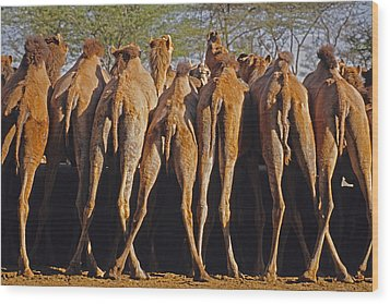 Wood Print featuring the photograph Rajasthan Camel Station by Dennis Cox WorldViews