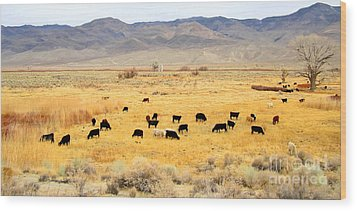 Range Cattle Wood Print by Marilyn Diaz