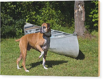 Ranger The Boxer Wood Print by Stephanie McDowell
