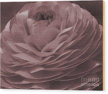 Wood Print featuring the photograph Ranunculus Red by Jean OKeeffe Macro Abundance Art