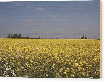 Wood Print featuring the photograph Rapeseed Field. by Paul Scoullar