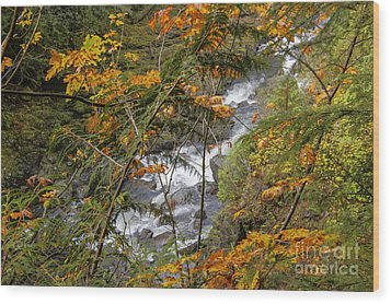 Rapids Through The Autumn Wood Print by Darleen Stry