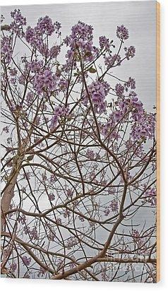 Rare Foxglove Tree - Paulownia Tomentosa  Wood Print