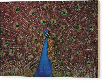 Wood Print featuring the photograph Rare Pink Tail Peacock by Eti Reid