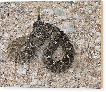 Wood Print featuring the photograph Rattler by Linda Cox