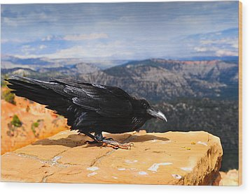 Raven Bryce Canyon Wood Print by Donald Fink