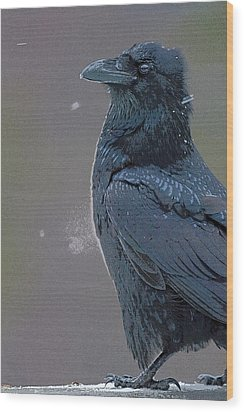 Raven In Snow- Abstract Wood Print by Tim Grams