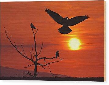 Raven Maniac Wood Print by Ron Day