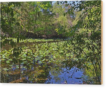 Ravine Gardens - A Different Look At Florida Wood Print by Christine Till