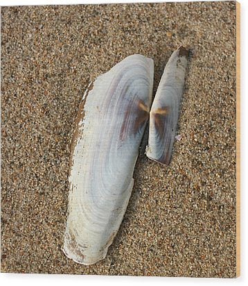 Razor Clam Wood Print by Bob and Jan Shriner