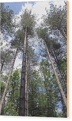 Reach For The Sky Wood Print by Tony Murtagh