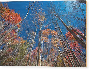 Reaching Color Wood Print by Scott Moore