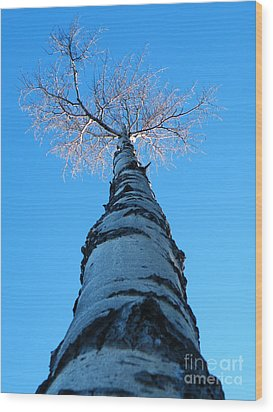 Reaching For The Light Wood Print by Brian Boyle