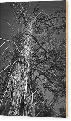 Wood Print featuring the photograph Reaching To The Sky by Greg Jackson