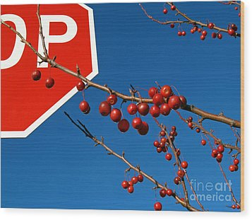 Rebellious Ornamental Crabapples In Autumn Wood Print by Anna Lisa Yoder