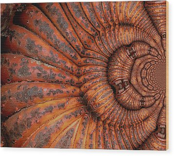 Recoiled 1 Wood Print by Wendy J St Christopher