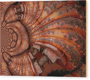 Recoiled 2 Wood Print by Wendy J St Christopher