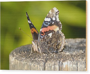 Red Admiral Butterfly Wood Print by David Lee Thompson
