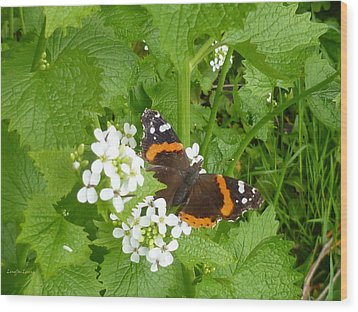 Wood Print featuring the photograph Red Admiral Butterfly by Lingfai Leung