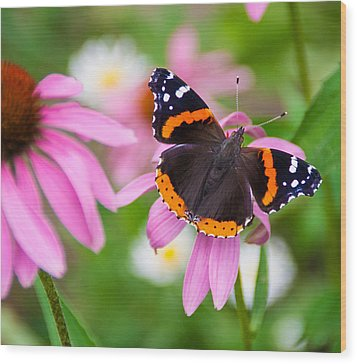 Red Admiral Butterfly Wood Print by Patti Deters