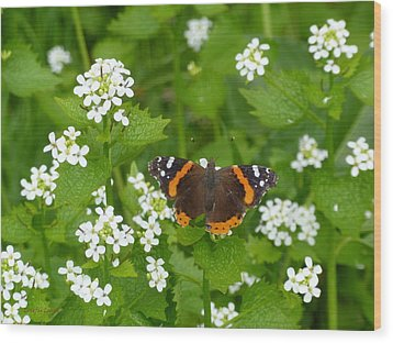 Wood Print featuring the photograph Red Admirals by Lingfai Leung