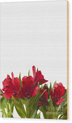 Red Alstroemeria Wood Print by Anne Gilbert