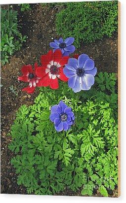 Red And Blue Anemones Wood Print by Ausra Huntington nee Paulauskaite