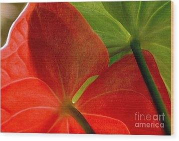 Red And Green Anthurium Wood Print by Ranjini Kandasamy