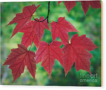 Red And Green Wood Print by Inge Johnsson
