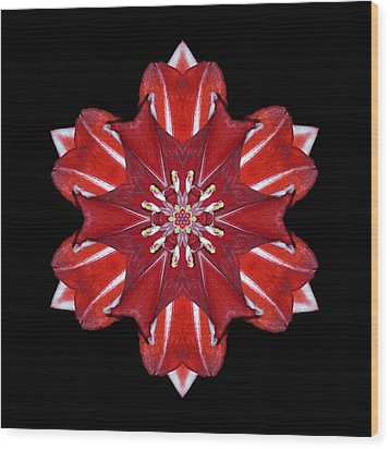 Red And White Amaryllis Vii Flower Mandala Wood Print by David J Bookbinder